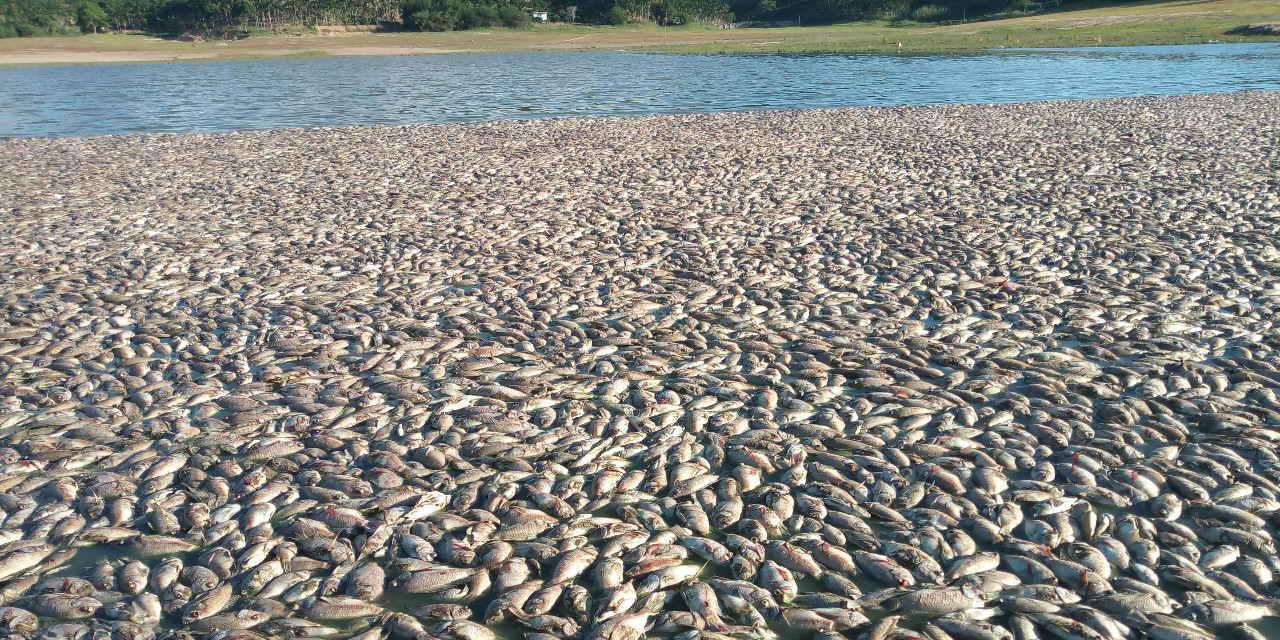 什么情况?海南三亚育才生态区南黎水库出现鱼儿大面积死亡!密集恐惧症慎入!