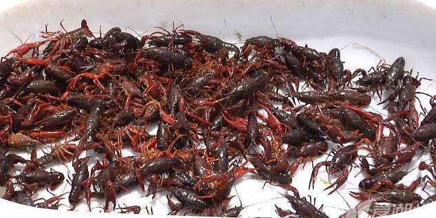 浙江湖州南浔:稻虾综合种养:效益、生态双丰收
