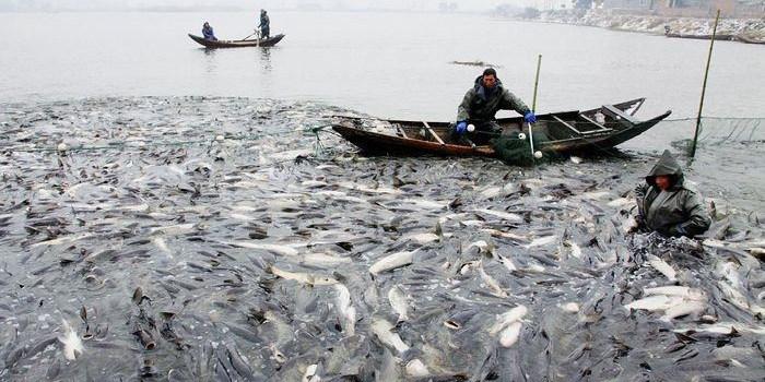 水产养殖户如何把握水产品市场变化趋势?