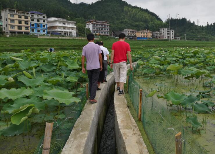 城步畜牧局验收湖南城步蓬瀛村水产养殖项目 加