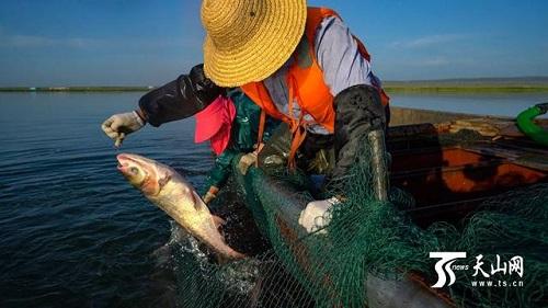 新疆乌伦古湖开湖:首日捕鱼六吨,渔民大赞丰