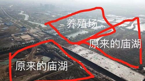 湖北荆州芈月桥施工后中华鲟陆续死亡,涉事养