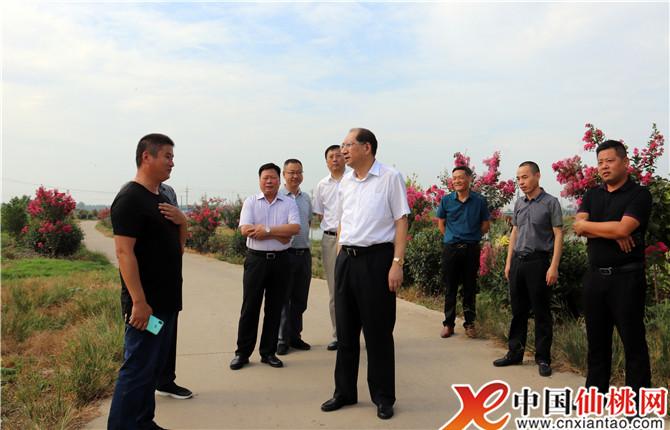 湖北省仙桃市市委书记胡玖明专题调研水产养殖