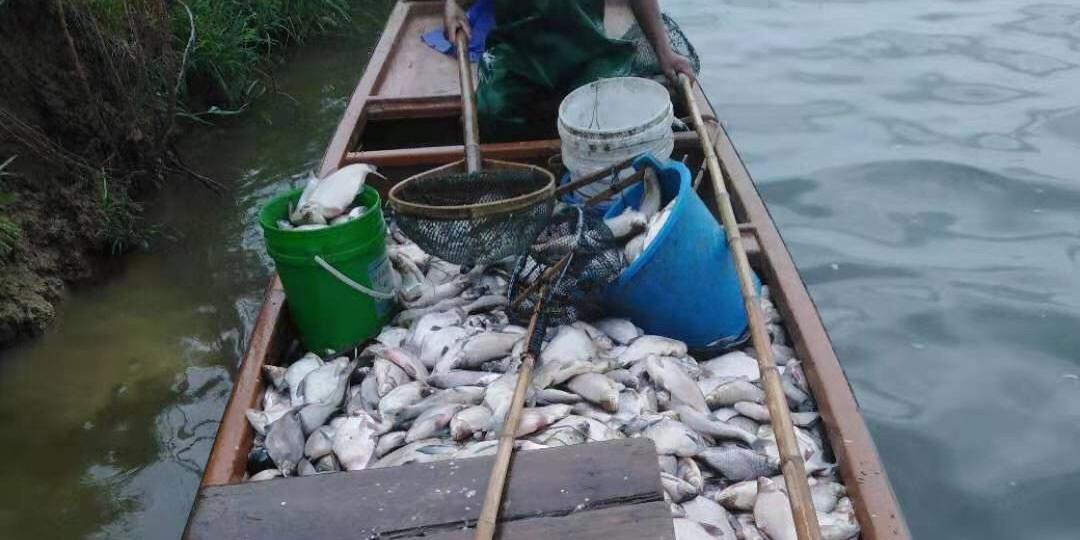 黑心经销商卖假药坑惨养殖户?已导致接近5万条鱼死亡!