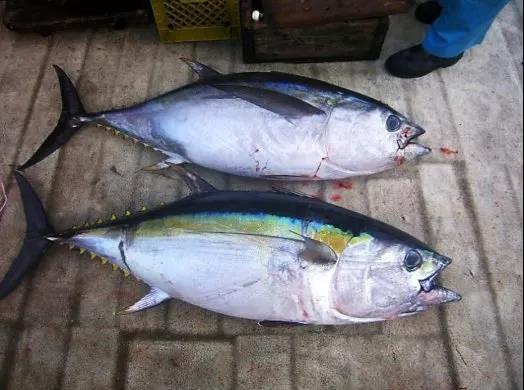 http://www.shuichan.cc/upload/news/news/n2019101509190888.jpg