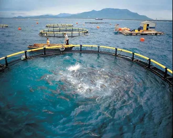国联水产拟在湛江徐闻建2000个深
