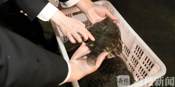 累计监管出口鲜活鲽鱼180余吨,江苏连云港水产出口复苏
