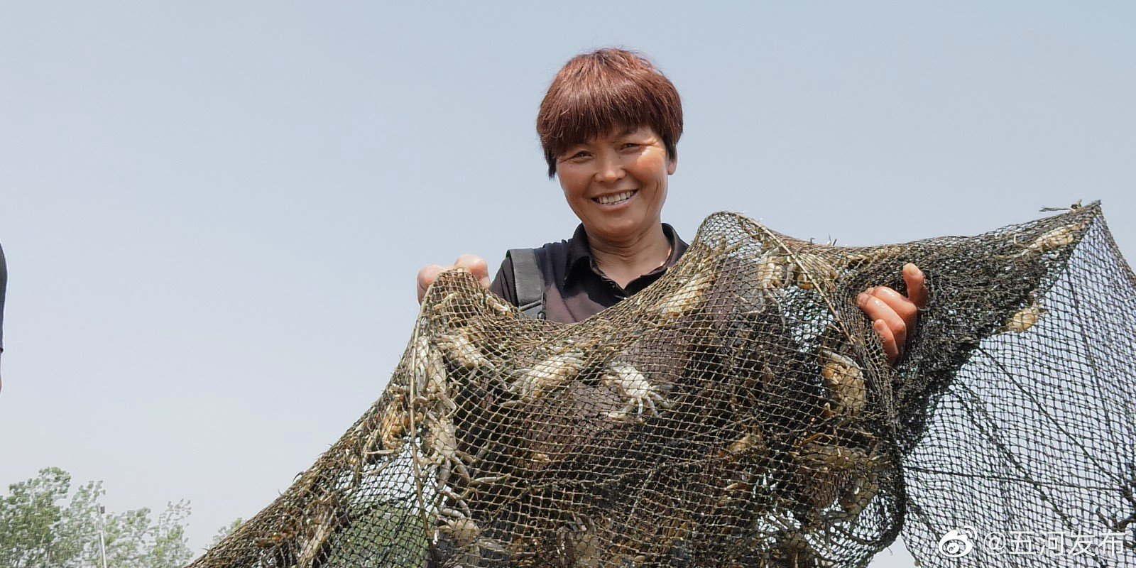 安徽蚌埠五河杨晓凤:勤劳致富 做发展特色种养业的带头人