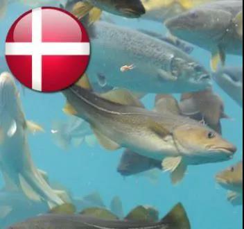 丹麦为保护鳕鱼种群签署行政命令