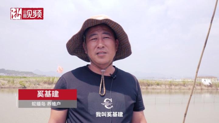 浙江三门蛇蟠岛:听养殖户说:谁家的塘在哪,电路怎么样,电力人一清二楚