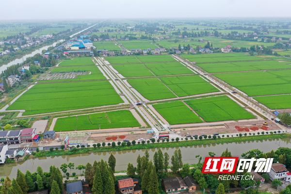 湖南粮食行业生态样本:南县稻虾产业助力乡村振兴