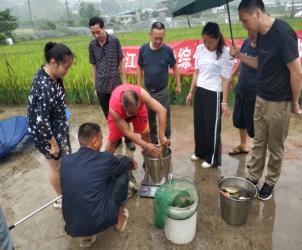 贵州省:麻江县开展稻渔综合种养测产验收