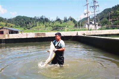 重庆市黔江区:发展特色水产养殖 增添乡村振兴动能