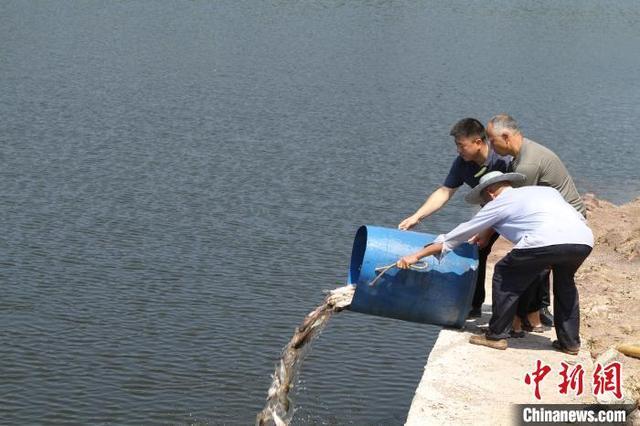 二十万尾鱼苗被放入长江重庆段用于生态补偿和修复