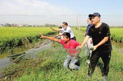 湖北省孝感市:稻虾共养助农增收