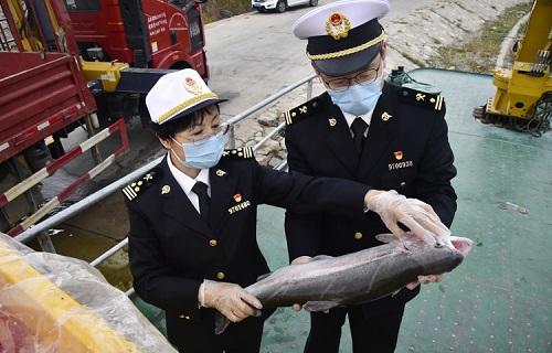 青海:西宁海关多措并举助力高原冷水鱼闯出大市场