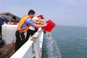 福建省石狮市:投放黑鲷鱼苗61.3万尾