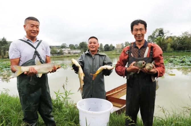 贵州大方:鱼肥虾美迎丰收