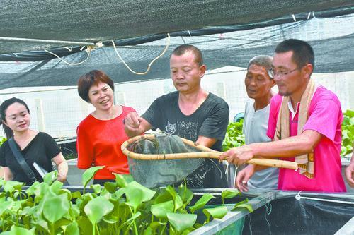 广西钦州市:淡水养殖撬动脱贫新动能