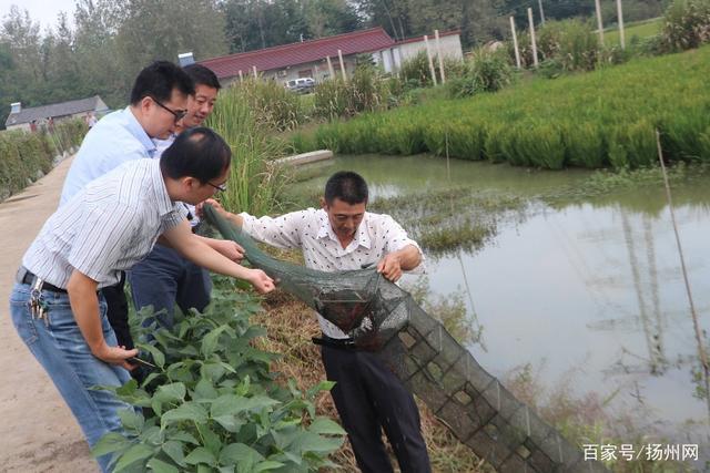 江苏:扬州稻田虾今年多了5万亩,看!小龙虾已提前打洞了