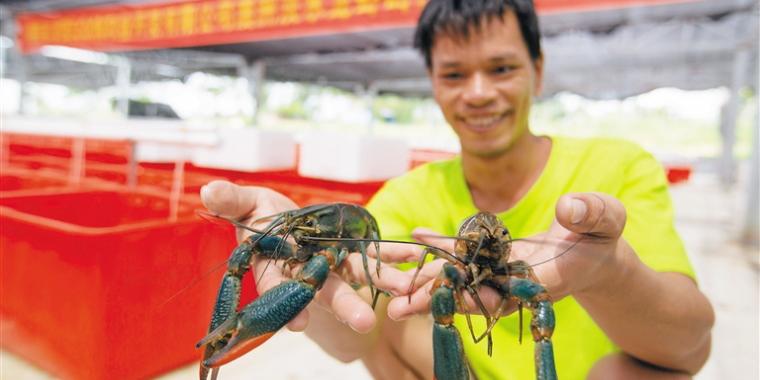 """淡水龙虾""""游""""出脱贫路,海南陵水县光坡镇大力发展高效水产养殖产业"""