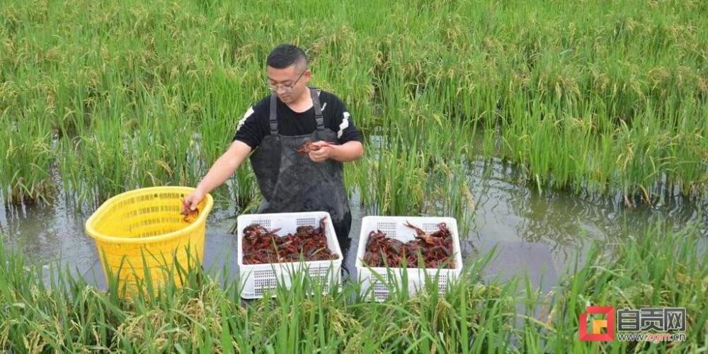 四川自贡荣县14240吨水产品喜逢好市场