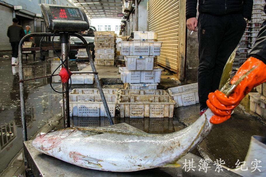 """辽宁海鲜市场现48斤超大""""油甘鱼"""" 令人称奇"""