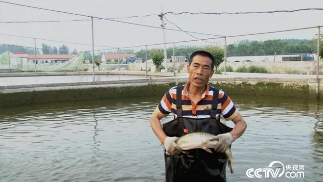 白斑狗鱼黑斑狗鱼的养殖前景利润分析 两种鱼让两个负翁变富翁